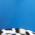 Basic Blue/Leopard Trim
